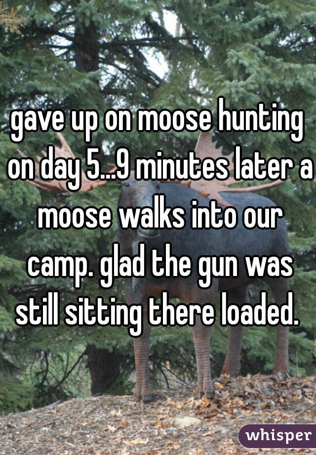 gave up on moose hunting on day 5...9 minutes later a moose walks into our camp. glad the gun was still sitting there loaded.