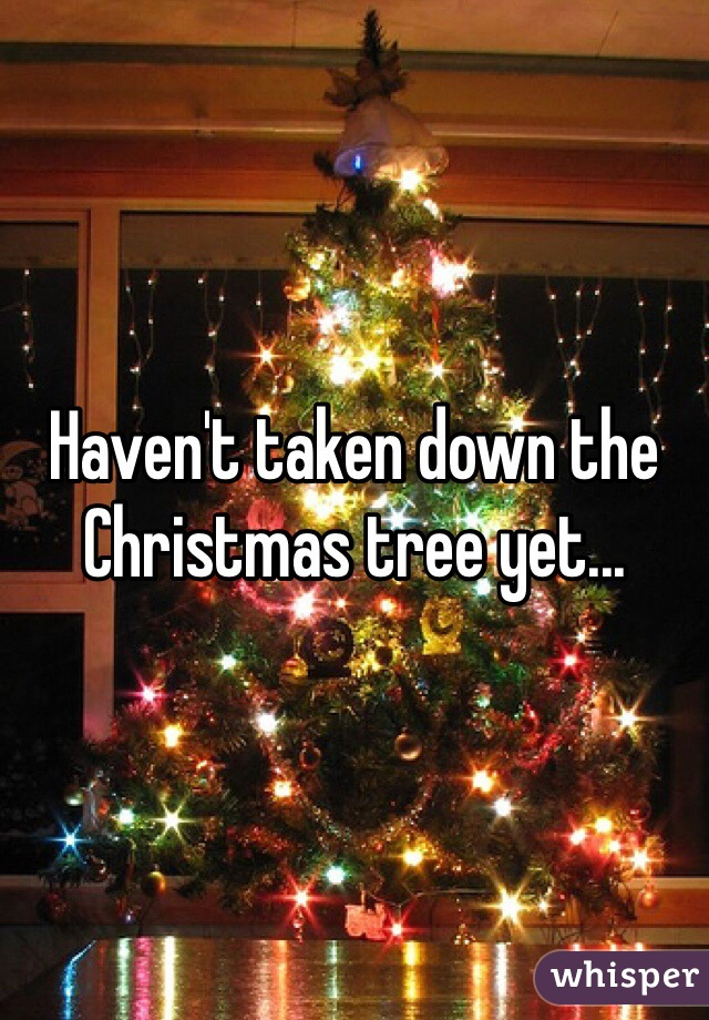 Haven't taken down the Christmas tree yet...