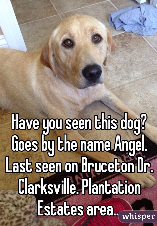 Have you seen this dog? Goes by the name Angel. Last seen on Bruceton Dr. Clarksville. Plantation Estates area...