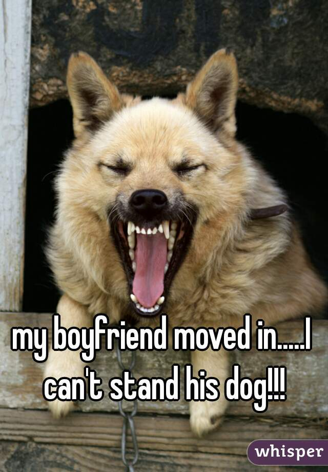 my boyfriend moved in.....I can't stand his dog!!!