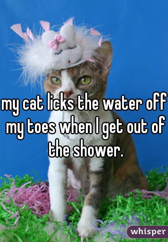 my cat licks the water off my toes when I get out of the shower.