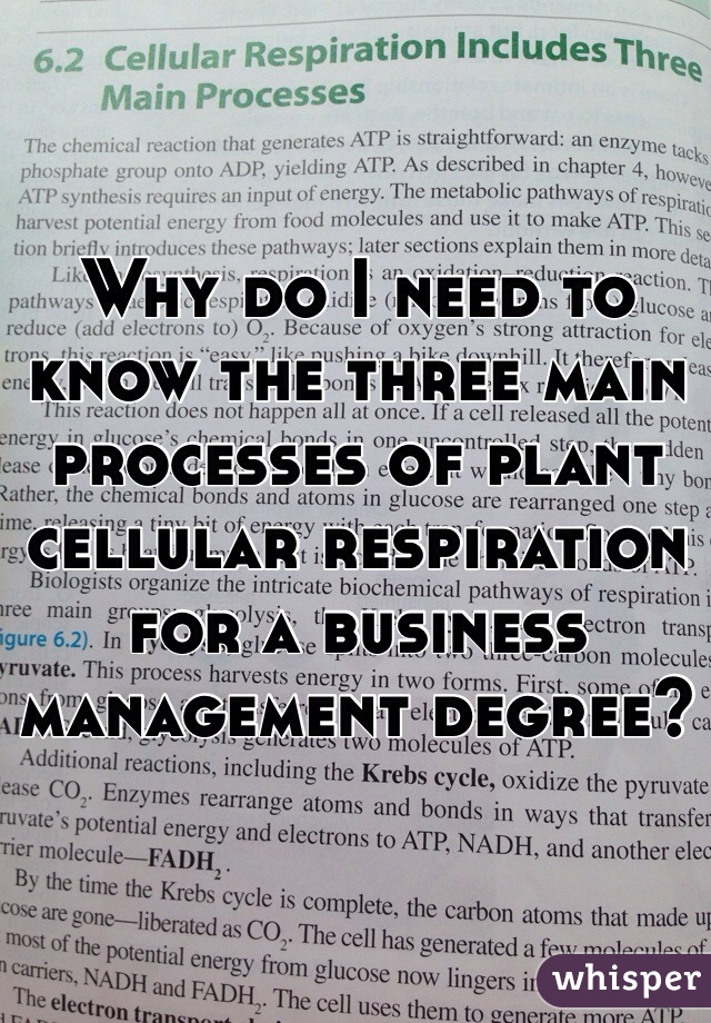 Why do I need to know the three main processes of plant cellular respiration for a business management degree?