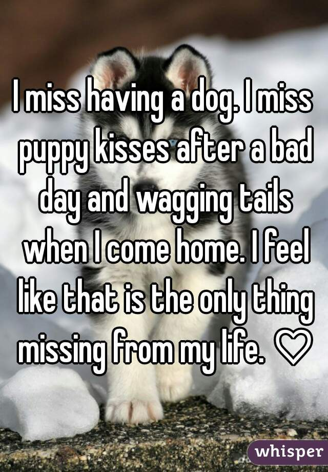 I miss having a dog. I miss puppy kisses after a bad day and wagging tails when I come home. I feel like that is the only thing missing from my life. ♡