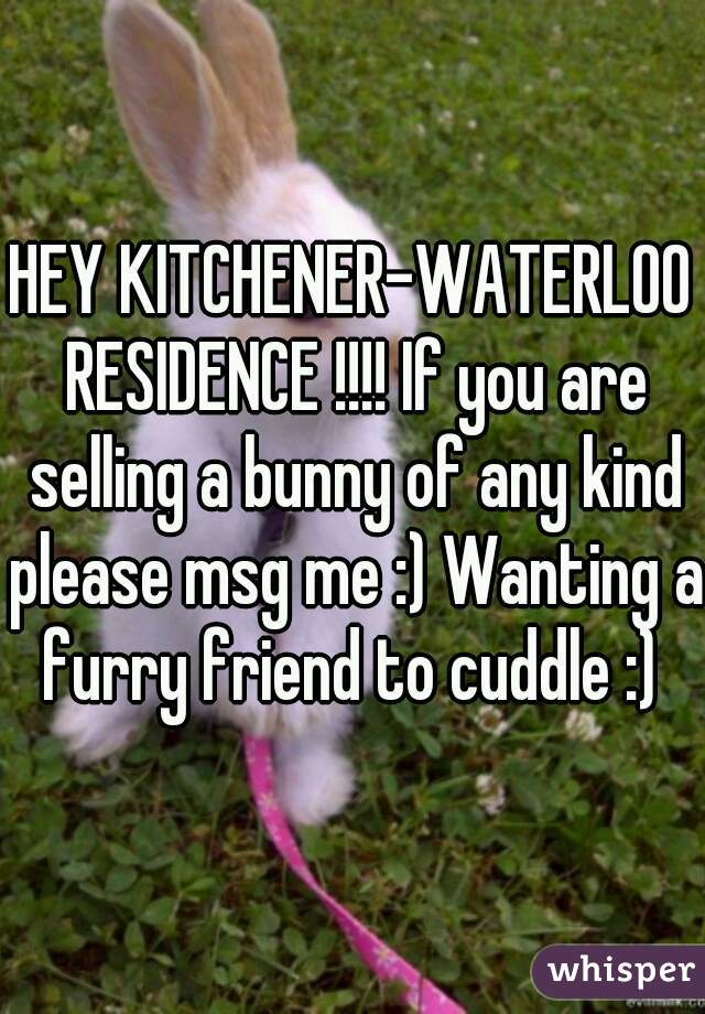 HEY KITCHENER-WATERLOO RESIDENCE !!!! If you are selling a bunny of any kind please msg me :) Wanting a furry friend to cuddle :)