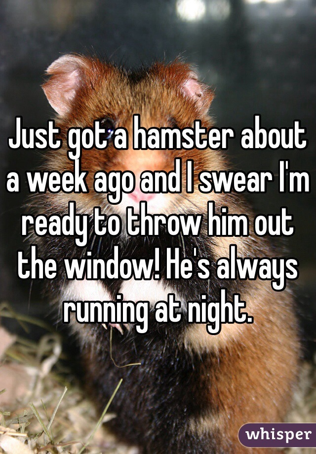 Just got a hamster about a week ago and I swear I'm ready to throw him out the window! He's always running at night.