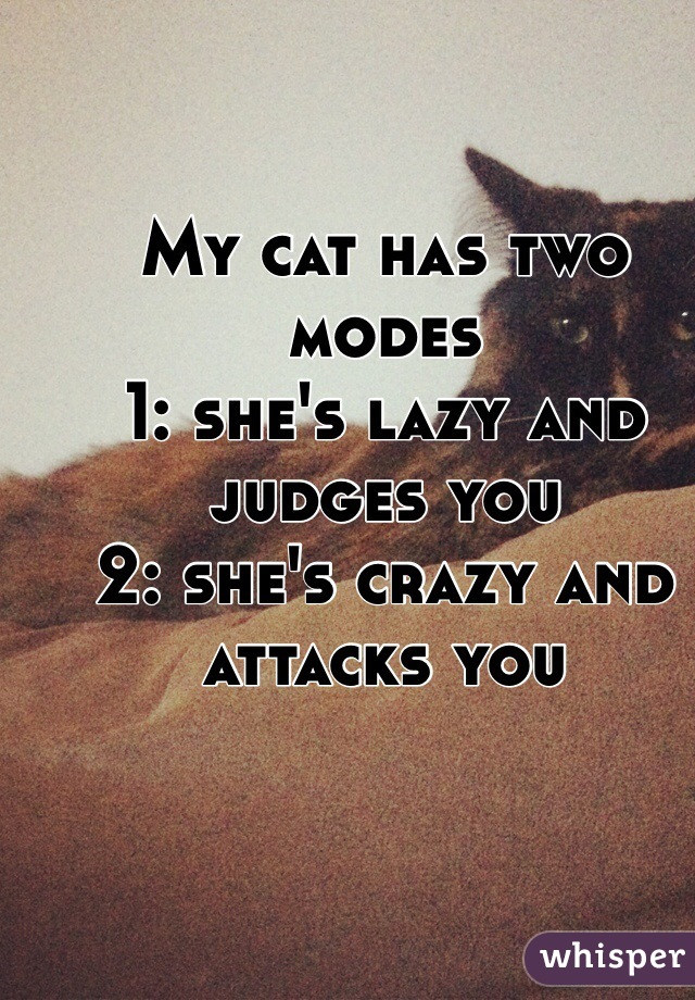 My cat has two modes 1: she's lazy and judges you 2: she's crazy and attacks you