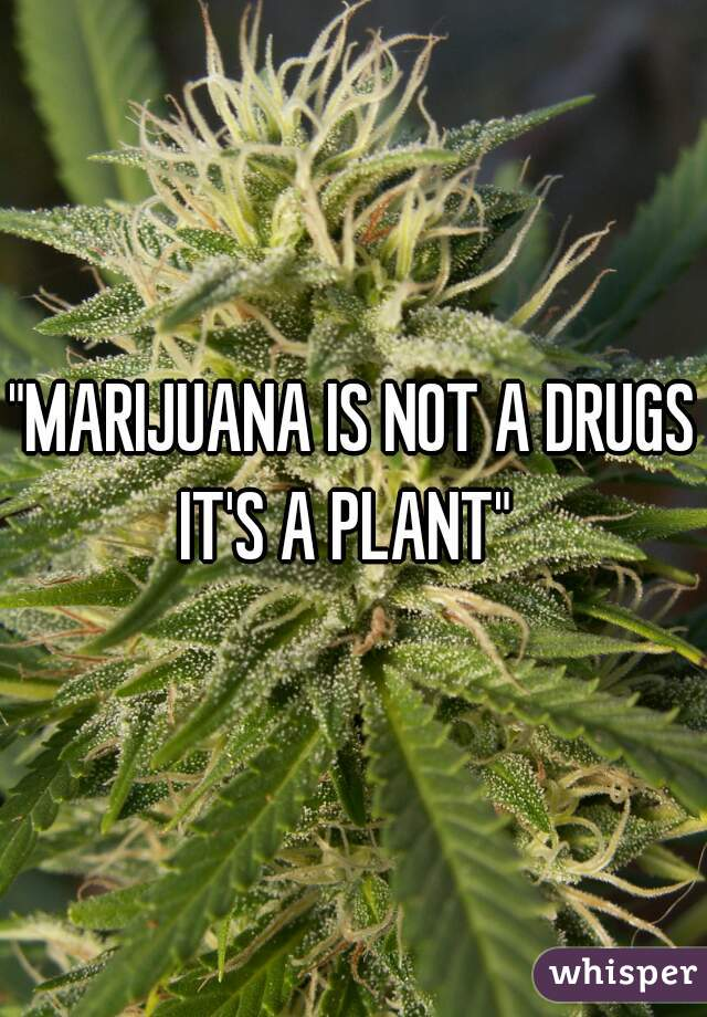 """MARIJUANA IS NOT A DRUGS IT'S A PLANT"""