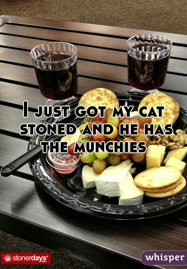 I just got my cat stoned and he has the munchies