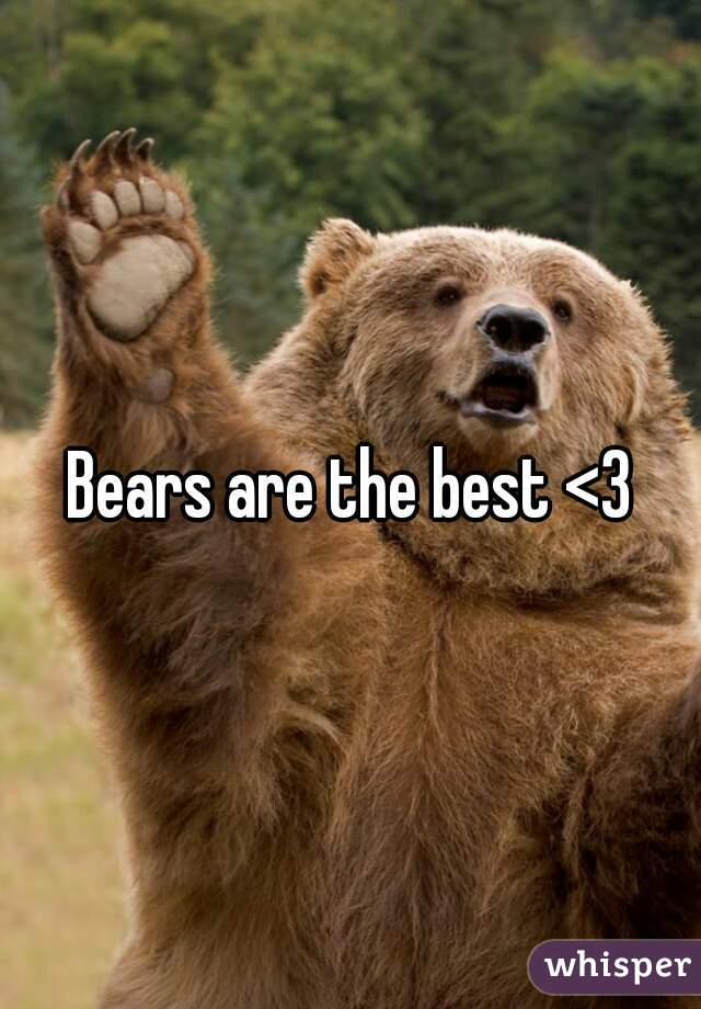 Bears are the best <3
