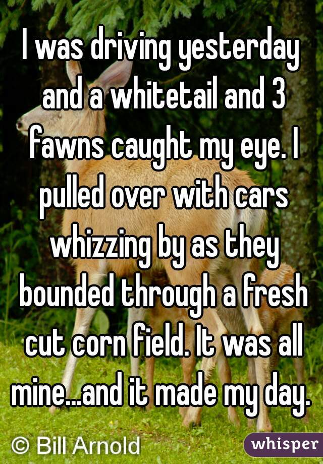 I was driving yesterday and a whitetail and 3 fawns caught my eye. I pulled over with cars whizzing by as they bounded through a fresh cut corn field. It was all mine...and it made my day.