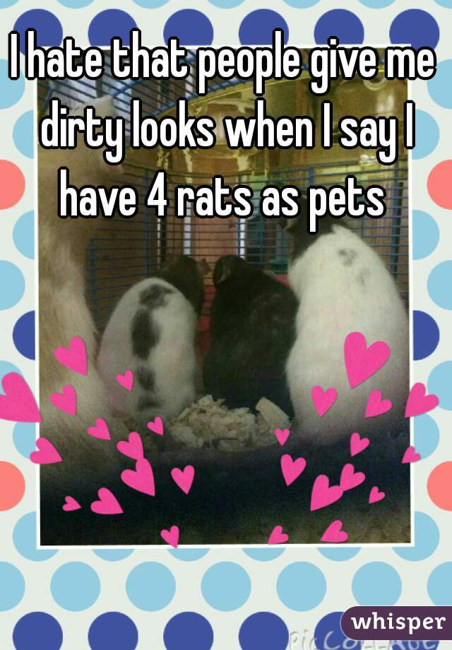 I hate that people give me dirty looks when I say I have 4 rats as pets