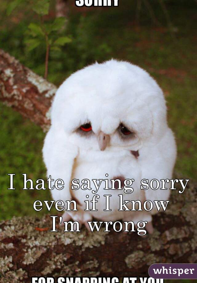 I hate saying sorry even if I know I'm wrong