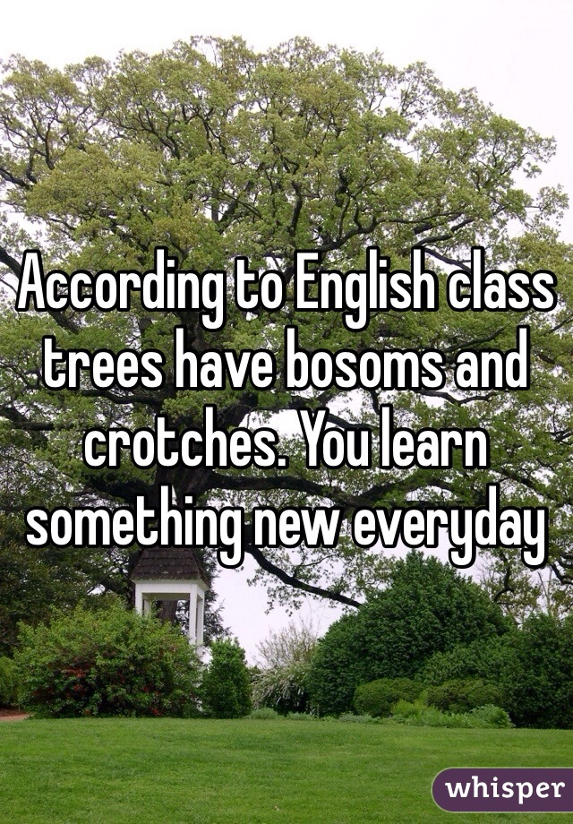According to English class trees have bosoms and crotches. You learn something new everyday