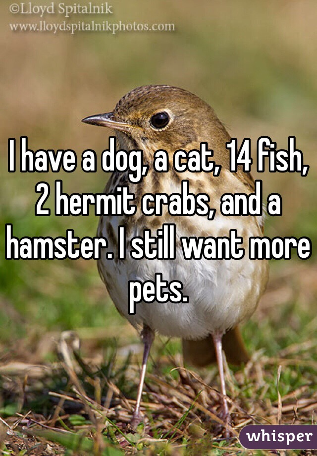 I have a dog, a cat, 14 fish, 2 hermit crabs, and a hamster. I still want more pets.