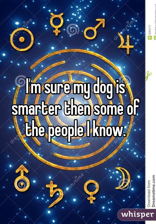 I'm sure my dog is smarter then some of the people I know.