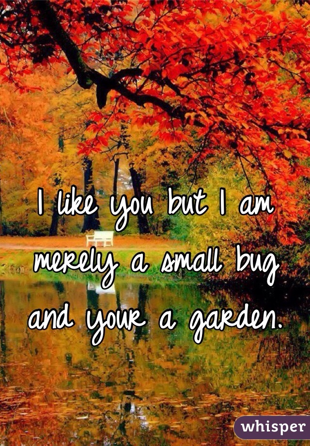 I like you but I am merely a small bug and your a garden.