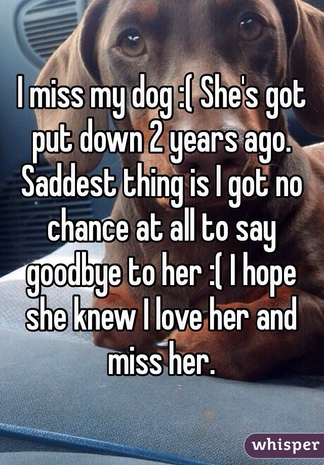I miss my dog :( She's got put down 2 years ago. Saddest thing is I got no chance at all to say goodbye to her :( I hope she knew I love her and miss her.