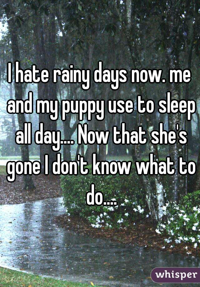 I hate rainy days now. me and my puppy use to sleep all day.... Now that she's gone I don't know what to do....