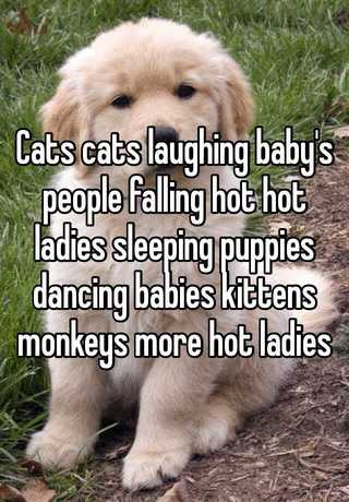 Cats Cats Laughing Babys People Falling Hot Hot Ladies Sleeping