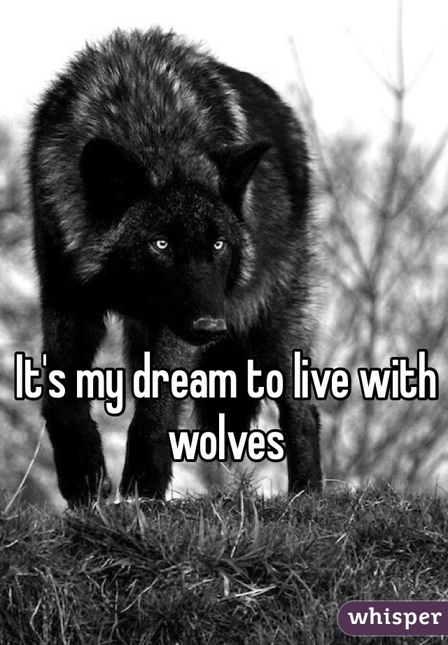 It's my dream to live with wolves