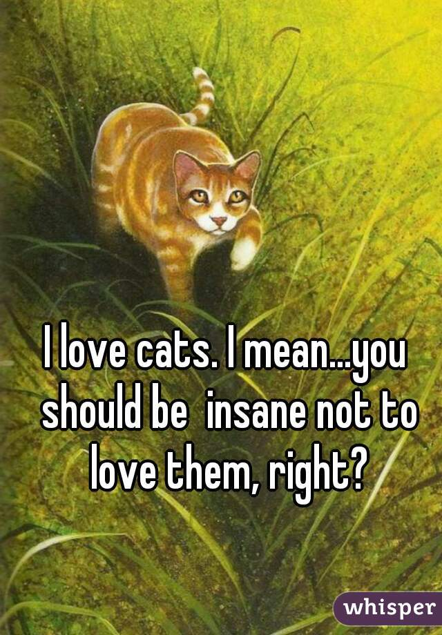 I love cats. I mean...you should be  insane not to love them, right?