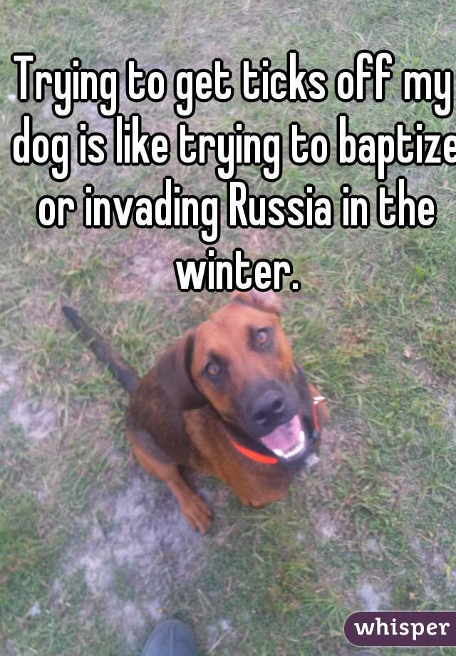 Trying to get ticks off my dog is like trying to baptize or invading Russia in the winter.