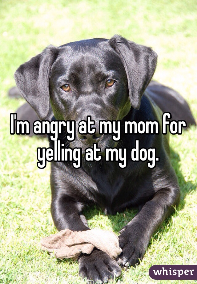 I'm angry at my mom for yelling at my dog.