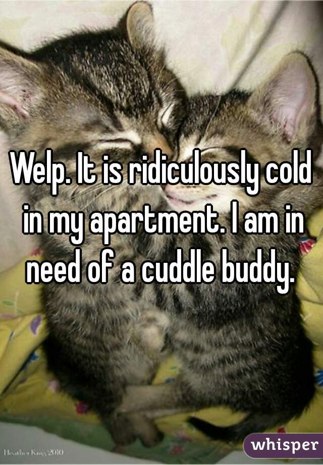 Welp. It is ridiculously cold in my apartment. I am in need of a cuddle buddy.