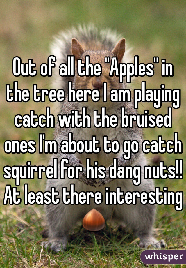 "Out of all the ""Apples"" in the tree here I am playing catch with the bruised ones I'm about to go catch squirrel for his dang nuts!! At least there interesting 🌰"