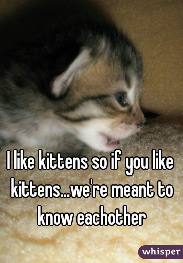 I like kittens so if you like kittens...we're meant to know eachother