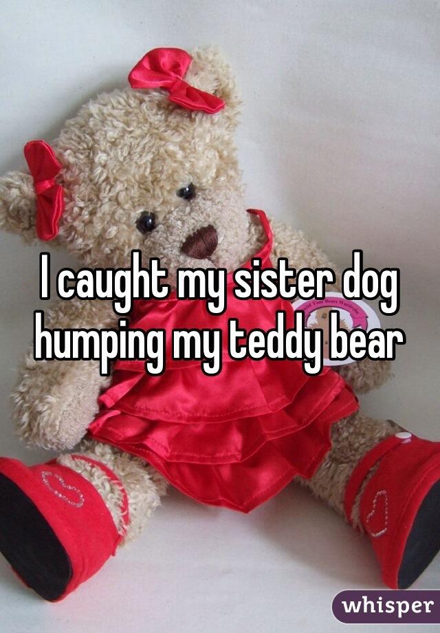 I caught my sister dog humping my teddy bear