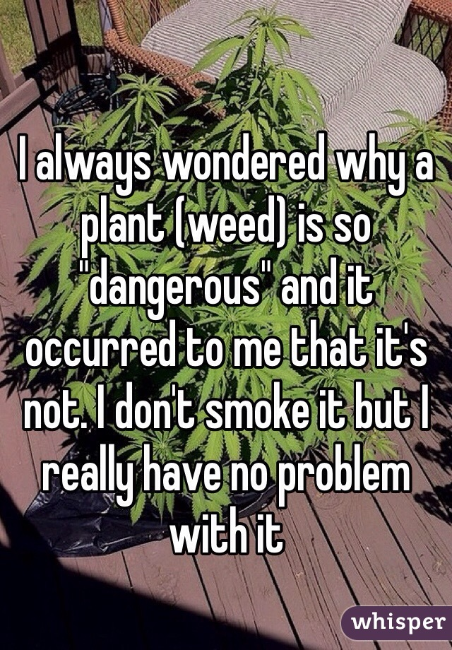 "I always wondered why a plant (weed) is so ""dangerous"" and it occurred to me that it's not. I don't smoke it but I really have no problem with it"