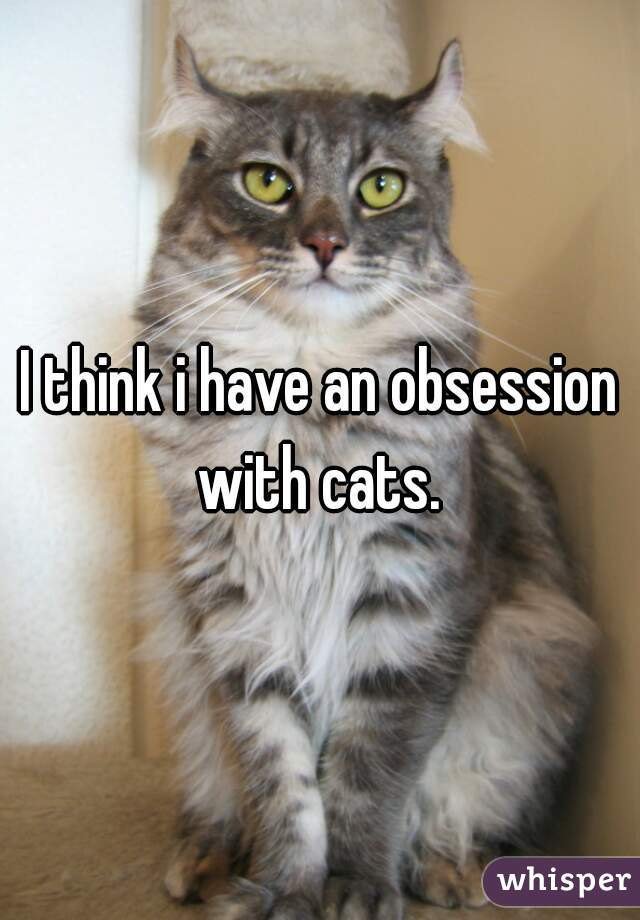 I think i have an obsession with cats.