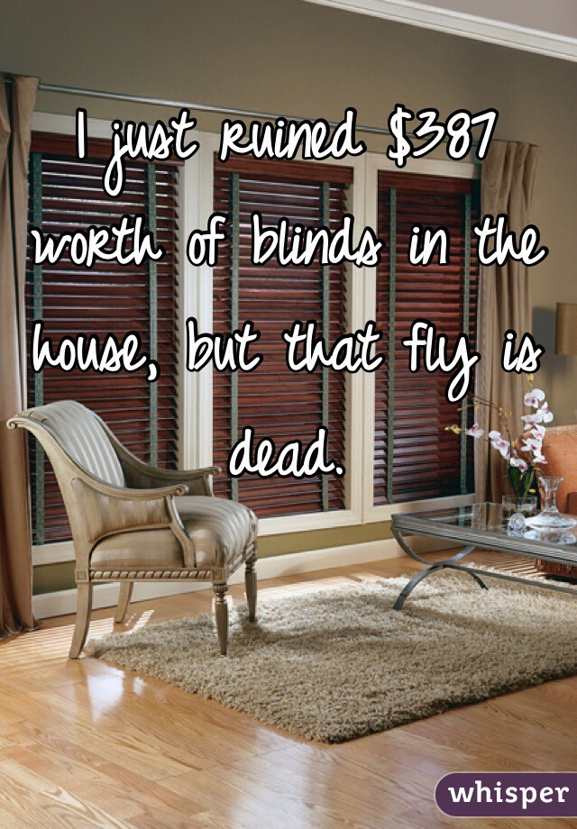 I just ruined $387 worth of blinds in the house, but that fly is dead.