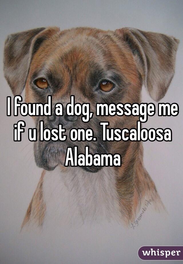 I found a dog, message me if u lost one. Tuscaloosa Alabama