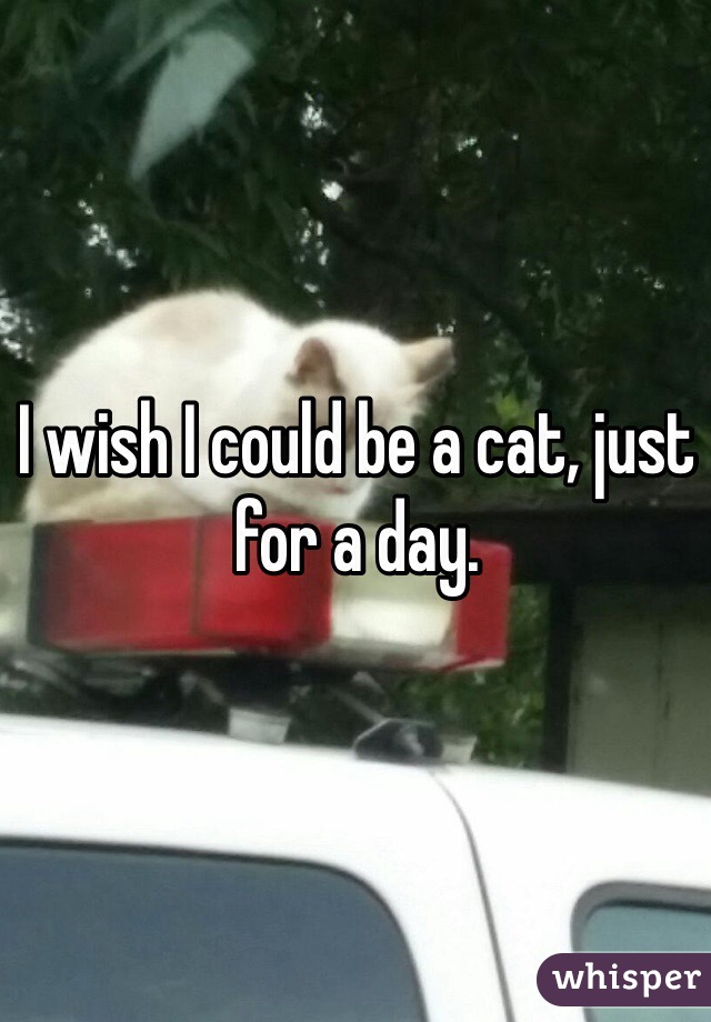 I wish I could be a cat, just for a day.