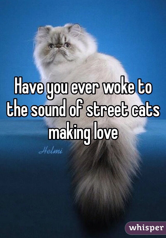 Have you ever woke to the sound of street cats making love