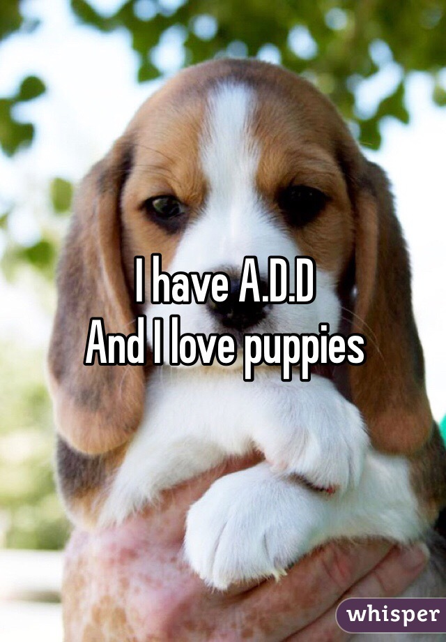 I have A.D.D And I love puppies