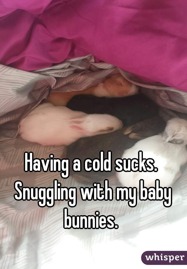 Having a cold sucks. Snuggling with my baby bunnies.