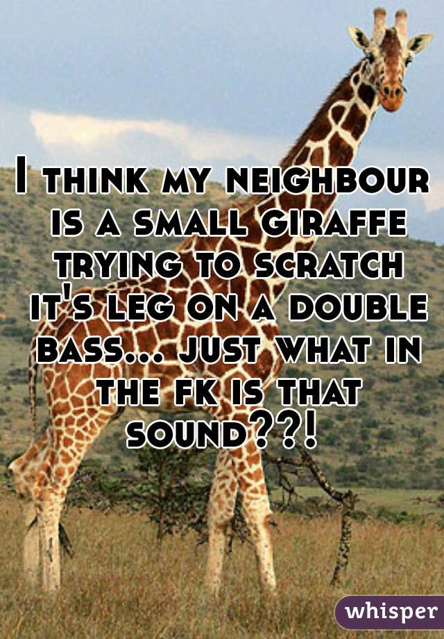 I think my neighbour is a small giraffe trying to scratch it's leg on a double bass... just what in the fk is that sound??!