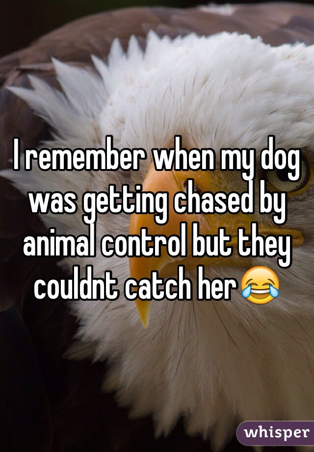 I remember when my dog was getting chased by animal control but they couldnt catch her😂