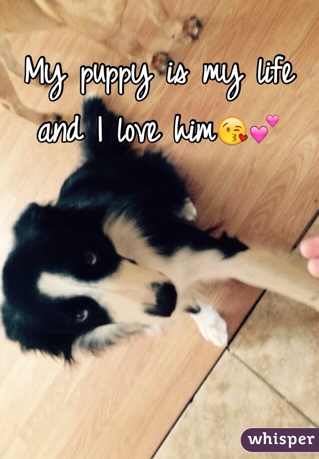 My puppy is my life and I love him😘💕