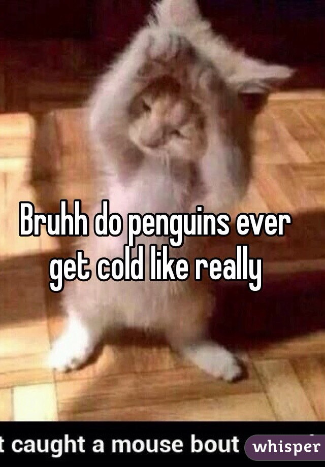 Bruhh do penguins ever get cold like really