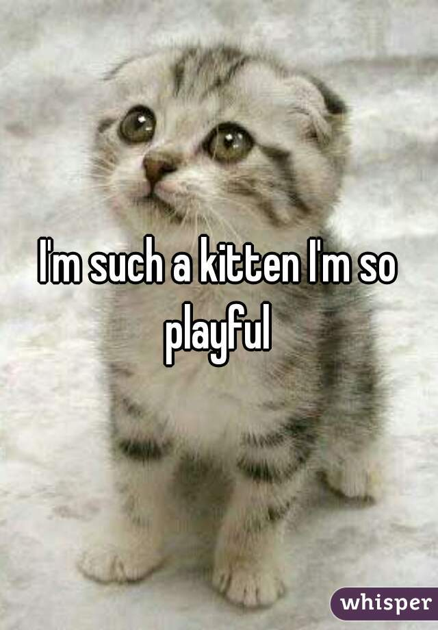 I'm such a kitten I'm so playful
