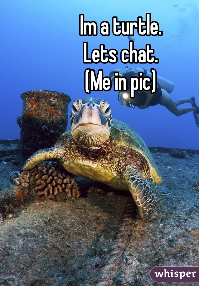 Im a turtle. Lets chat. (Me in pic)