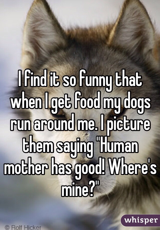 """I find it so funny that when I get food my dogs run around me. I picture them saying """"Human mother has good! Where's mine?"""""""