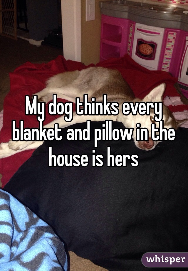 My dog thinks every blanket and pillow in the house is hers