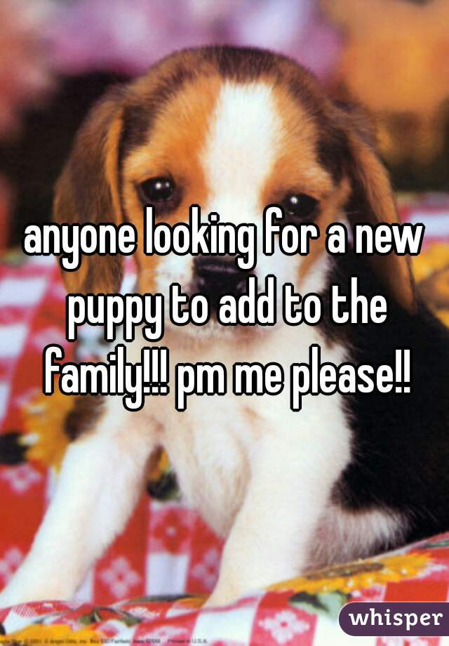 anyone looking for a new puppy to add to the family!!! pm me please!!