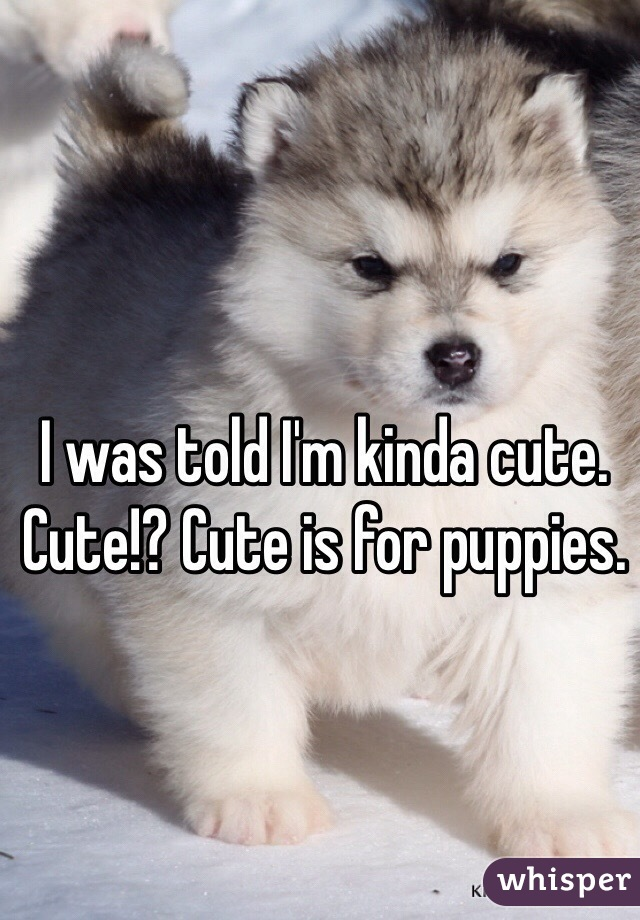 I was told I'm kinda cute. Cute!? Cute is for puppies.