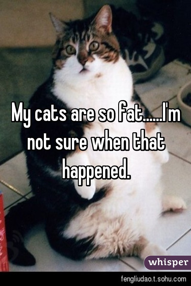 My cats are so fat......I'm not sure when that happened.